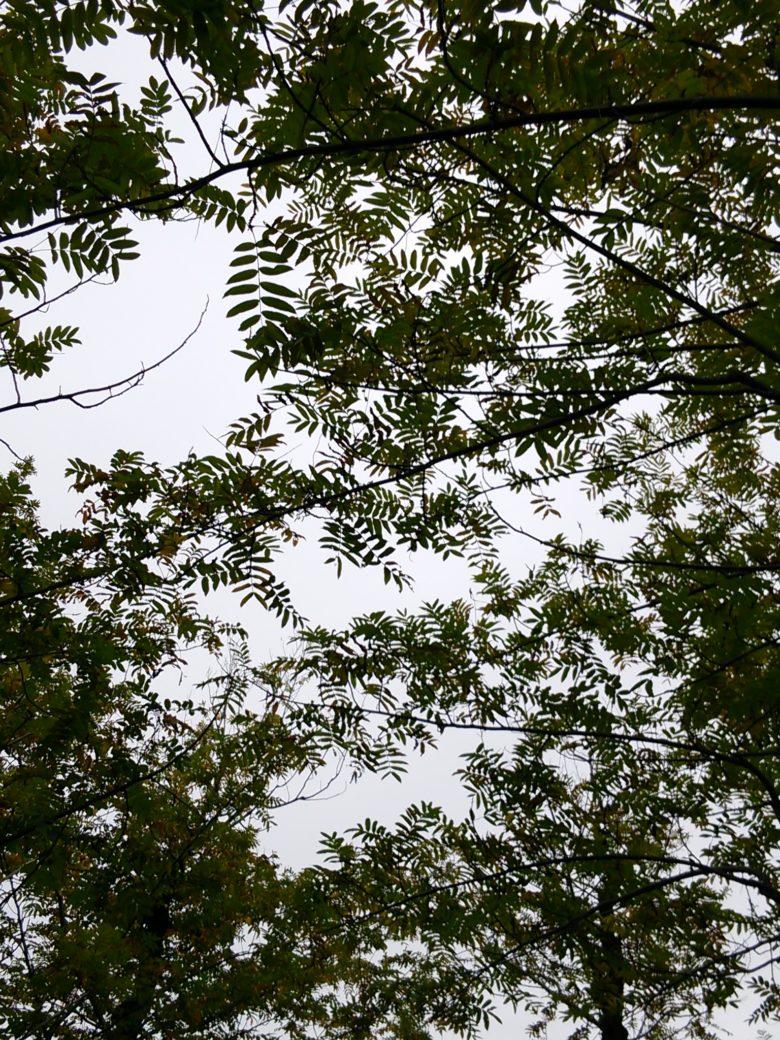公園の木々の画像